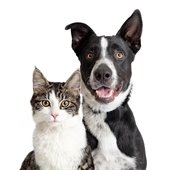 Foster Pets