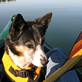 Paddle and Paws