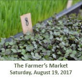 The Woodlands Farmer's Market at Grogan's Mill (August 19, 2017)