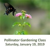 Pollinator Gardening Class