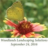 Woodlands Landscaping Solutions