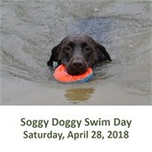 Soggy Doggy Swim Day
