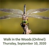 Walk in the Woods Online Lecture