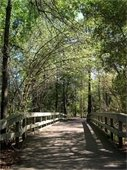 Pathways in The Woodlands