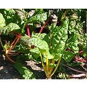 Gardening 102: Tasteful Landscapes