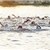 Triathlon Competitors Swimming