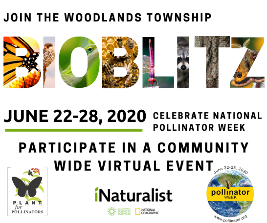 The Woodlands Township to host community-wide BioBlitz