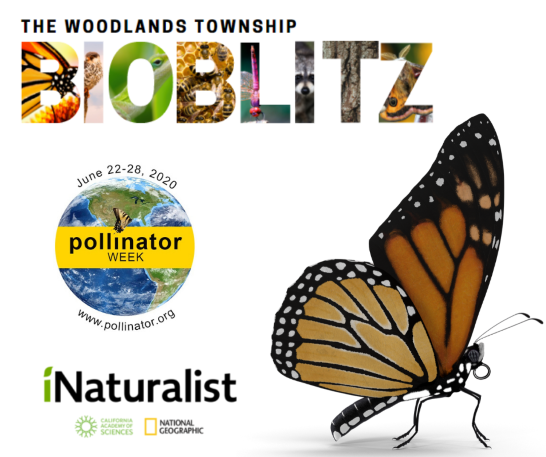 monarch bioblitz web