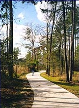 A pathway in The Woodlands