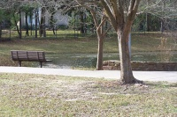 Pond and park bench